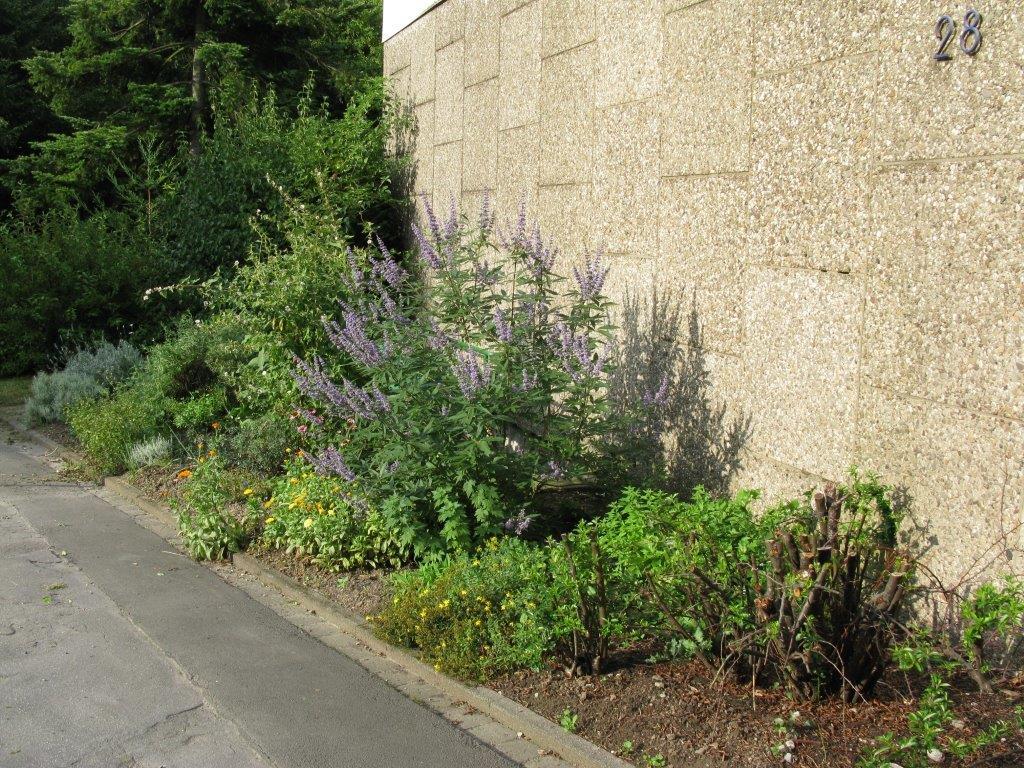 medicinal plants garden
