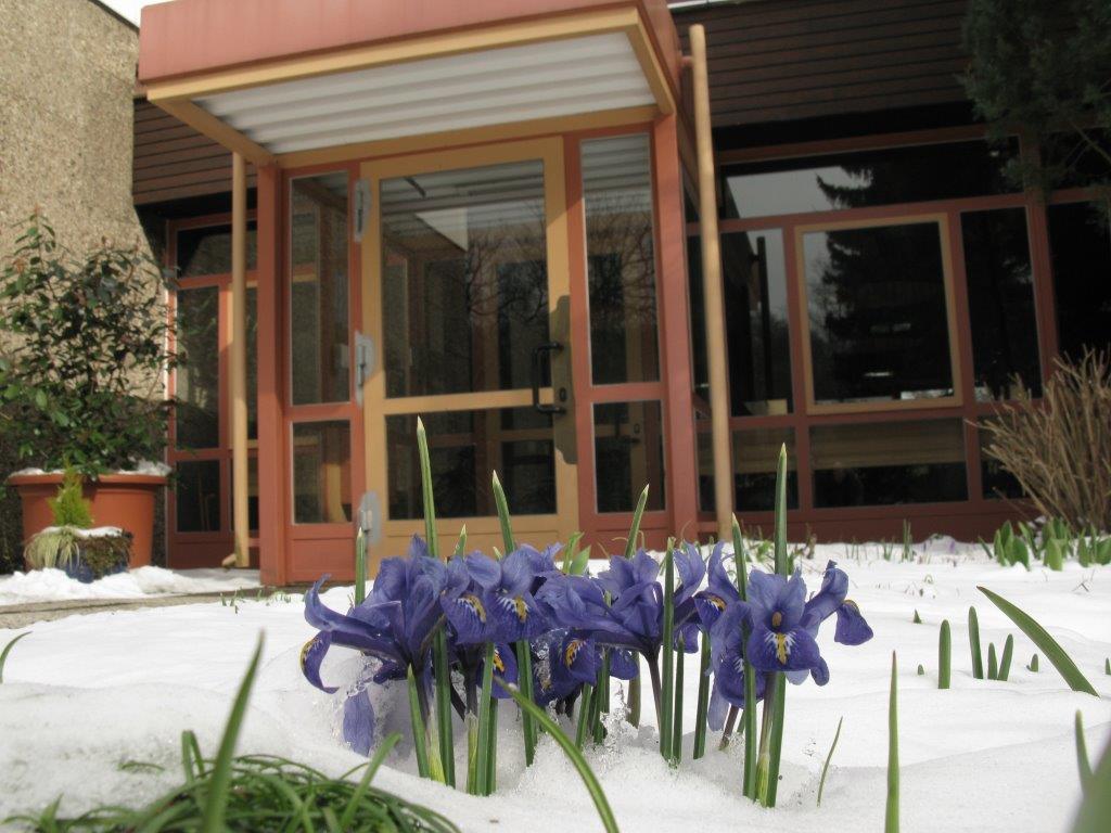 winter with iris